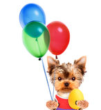 Funny dogs with egg and balloons Royalty Free Stock Photos