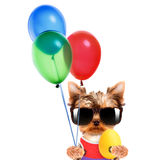 Funny dogs with egg and balloons Royalty Free Stock Images