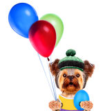 Funny dogs with egg and balloons Royalty Free Stock Image