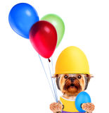 Funny dogs with egg and balloons Stock Photography