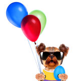 Funny dogs with egg and balloons Stock Photos