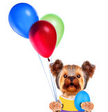 Funny dogs with egg and balloons Royalty Free Stock Photo