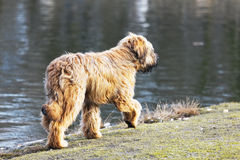 Funny dogs frolicking in the park Royalty Free Stock Image