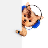 Funny dogs listening to music on headphones. Behind banner. Concept of sport and fitness. Realistic 3D illustration Stock Images