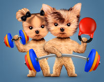 Funny dogs training with barbell and dumbbell Royalty Free Stock Photo