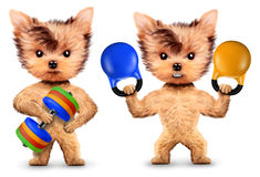 Funny dogs training with barbell and dumbbell. Concept of sport and fitness. Realistic 3D illustration Stock Image