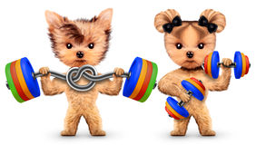 Funny dogs training with barbells and dumbbells Royalty Free Stock Photo