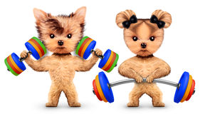 Funny dogs training with barbells and dumbbells Stock Image