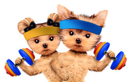 Funny dogs training with barbells and dumbbells. Concept of sport and fitness. Realistic 3D illustration Royalty Free Stock Photo