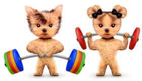 Funny dogs training with barbells in sport gym Stock Photo