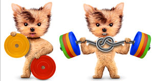 Funny dogs training with barbells in sport gym. Concept of sport and fitness. Realistic 3D illustration Stock Image