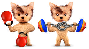 Funny dogs training with kettlebell and dumbbell. In sport gym. Concept of sport and fitness. Realistic 3D illustration Royalty Free Stock Images