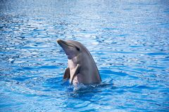 Funny dolphines valencia 2016 Royalty Free Stock Photo