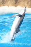 Funny Dolphins Stock Image