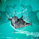 Funny dolphins Royalty Free Stock Image