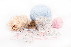 Funny domestic mouse is hiding among tangles of yarn. Royalty Free Stock Photography