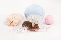 Funny domestic mouse is hiding among tangles of yarn. Yarn is blue, beige, pink and fluffy. Mouse has bushy wiskers. Mouse is funny, cute and curios Royalty Free Stock Photos