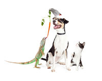 Funny Domestic Pets Interacting Together Stock Image
