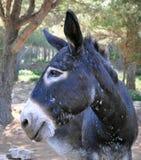 Funny donkey royalty free stock photos