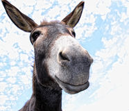 Funny Donkey. Comical looking donkey looks in the cam with fun stock image