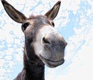 Funny Donkey Stock Image