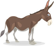 Funny donkey cartoon illustration Stock Images