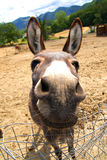 Funny donkey Royalty Free Stock Photography