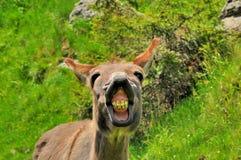 Funny donkey Stock Images