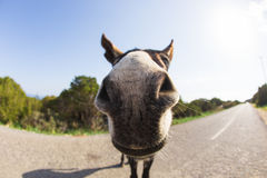Funny donkey looking at the camera. Cyprus, Karpaz National Park Wild Donkey Protection Area Stock Photography