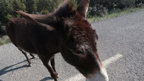 Funny donkey on road stock video footage