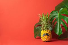 Funny dressed pineapple with black mustache leaves of a monstera plant on a trendy coral background. Concept minimalism. Funny dressed pineapple with black royalty free stock image