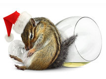 Funny drunk chipmunk dress santa hat Royalty Free Stock Photo