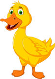 Funny duck cartoon posing Stock Photo