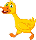 Funny duck cartoon running Stock Photography
