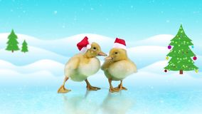 Funny ducklings in red Santa Claus hats sliding on the ice. Winter day background with snowfall and Christmas tree, copy space stock footage