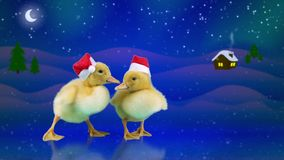 Funny ducklings in red Santa hats sliding on the ice, winter night background. With snowfall, moon, starts and home, copy space stock video