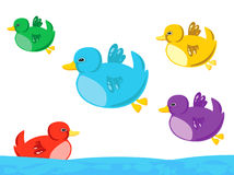Funny ducks. Colorful funny ducks flying and one of them swimming Royalty Free Stock Photography