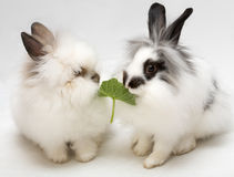 Funny dwarfish rabbits stock photography