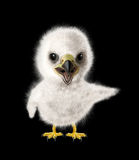 Funny Eagle chick Stock Photography
