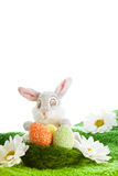 Funny easter bunny Stock Images