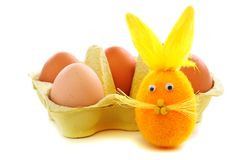 Funny easter bunny. Royalty Free Stock Photography