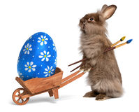 Funny Easter bunny rabbit with a wheelbarrow and b Royalty Free Stock Image