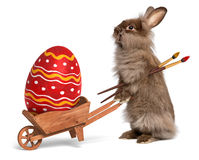 Funny Easter bunny rabbit with a wheelbarrow and a red Easter eg. Cute Easter bunny rabbit with a little wheelbarrow and a red painted Easter egg,  on white, CG+ Royalty Free Stock Photo