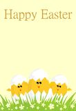 Funny easter card. With chickens Stock Photos