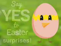 Funny Easter card with chicken looking from hatched egg and text Royalty Free Stock Image