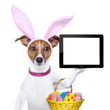 Funny easter dog. Dog dressed up as bunny with easter basket holding a tablet pc stock image