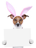 Funny easter dog with blank space Royalty Free Stock Image