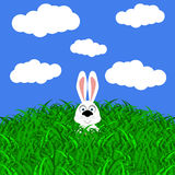 Funny easter rabbit on white background Stock Photo