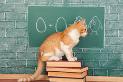 Funny education Stock Images