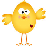 Funny egg chick cartoon Stock Images